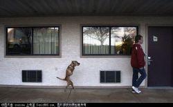 Faithdog
