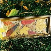 Framed leaves